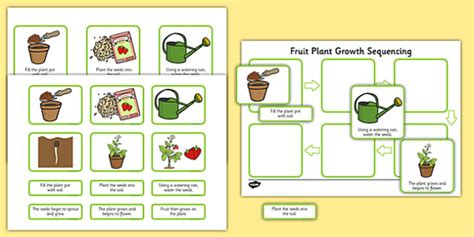 Plant Growth Sequencing Activity - plants, flowers, grow