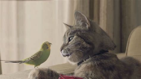 Love Knows No Bounds for Budgie and Cat in Charming