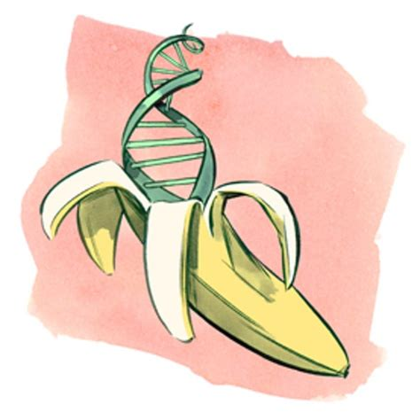 Find the DNA in a Banana - Scientific American