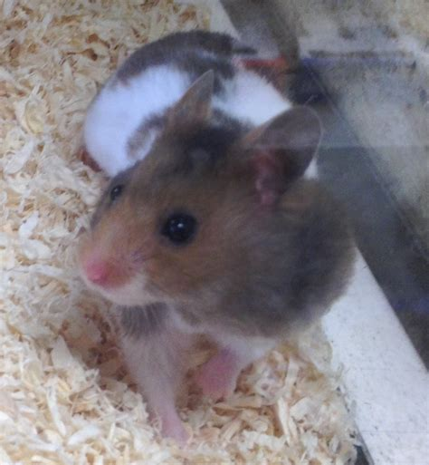 Pet Shops Near Me That Sell Hamsters - Pet's Gallery