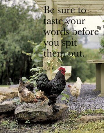 Taste your words | Chickens backyard, Best egg laying
