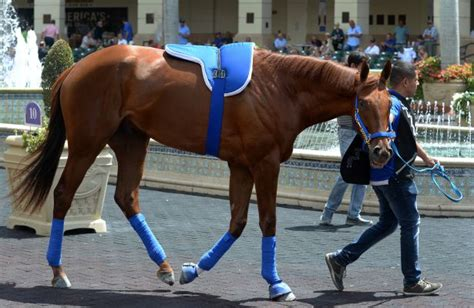 Gunnevera schools in the paddock for Florida Derby - Horse